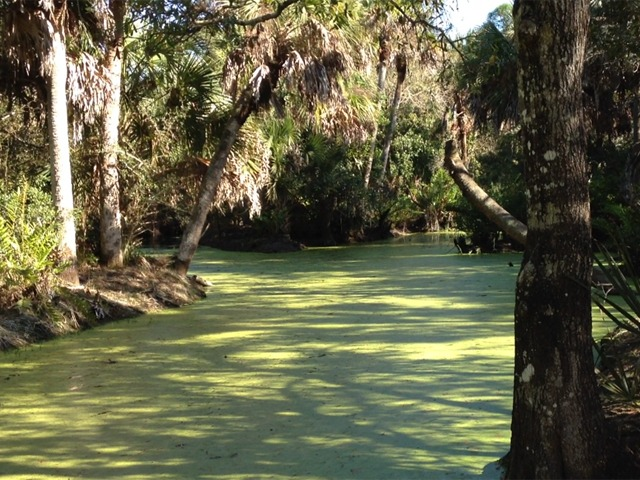 Naples Real Estate - Cocohatchee Creek Preserve Photo
